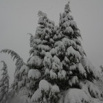The trees around the lodge heavy with snow