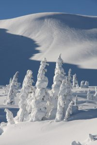 Snow Covered Trees On BC Canada's Heli Skiing Mountain